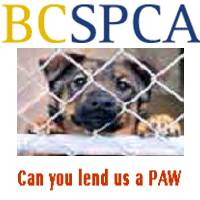 Give to the SPCA in your area today
