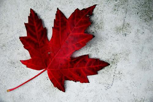 Canada+day